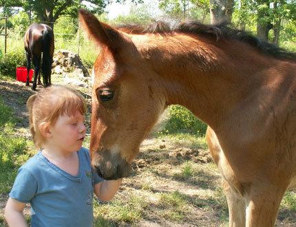 Barn med hästföl