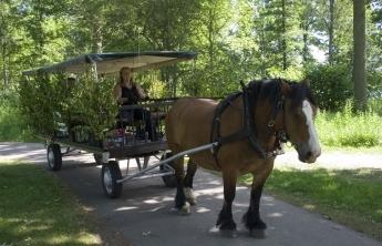 Häst och vagn - Börjes i Tingsryd