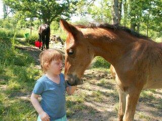 Pferde auf dem Nachbarhof