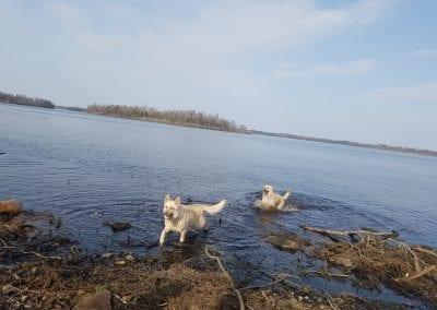 Hundarna älskar att bada