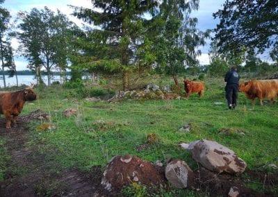 Kühe auf dem Nachbarhof